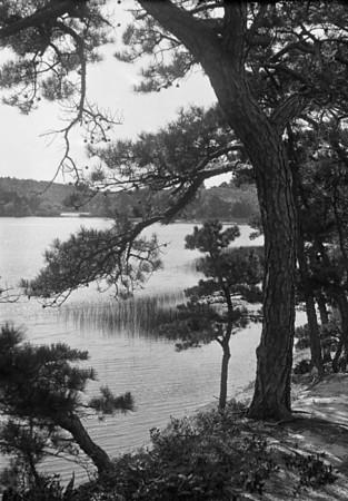 WT3_1931 - Long Pond