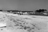 View west along Shirttail Point - Wellfleet, MA , late 1950s