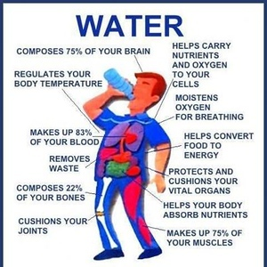 water 75% of your brain