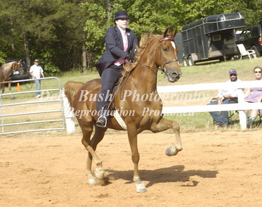 CLASS 10 OPEN GAITED HORSE  ADULT