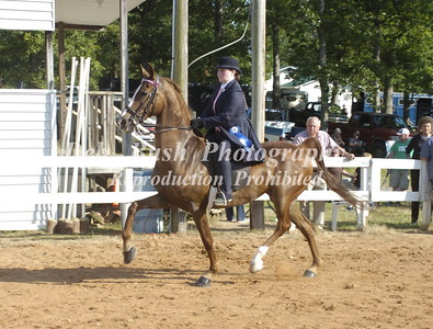 CLASS 18 AMERICAN SADDLEBRED OPEN WALK TROT