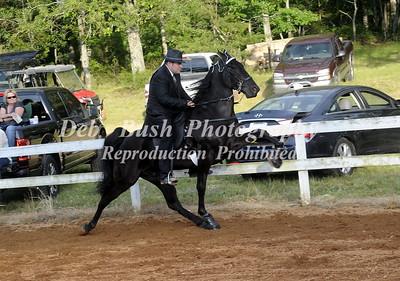 CLASS 27  OPEN WALKING HORSE