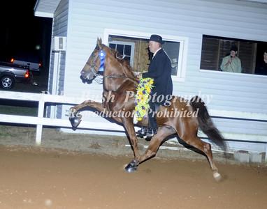 CLASS 37  WALKING HORSE STAKE