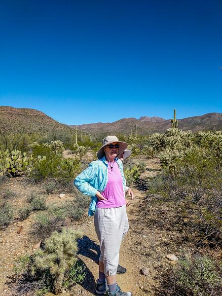 Sonoran desert near Tucson, AZ