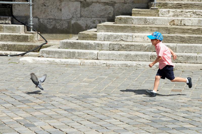 The pigeon won.