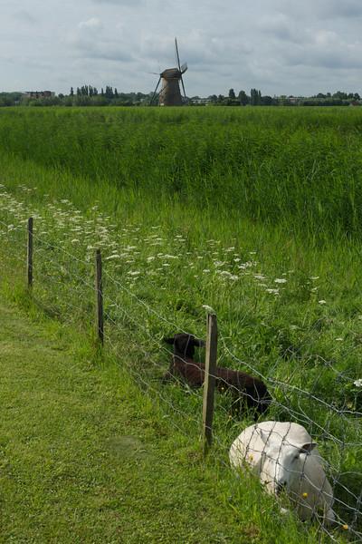 The countryside in Kinderdijk.