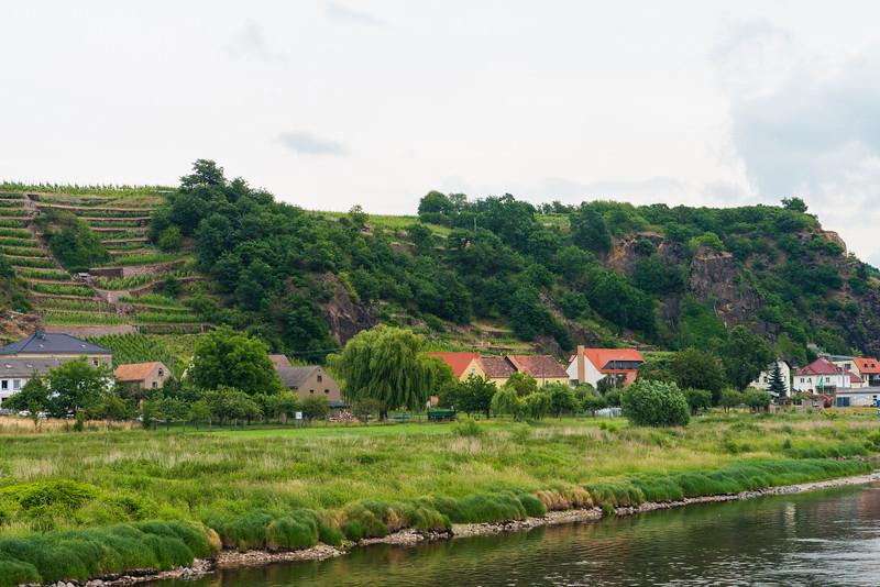 Vinyards of the Seußlitzer Heinrichsburg, wine region of Saxony.