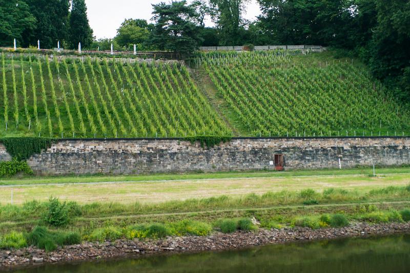 Vertical vineyard view south of Dresden.