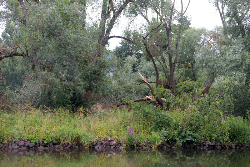 Recent storm damage on the Main-Danube Canal.