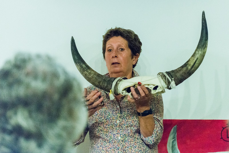 Madame illustrates the manner in which the bloodless bulfights are conducted in the Camague region. The objects hanging from the bull's horns are removed by the rushing matadors to gain points and Euros.