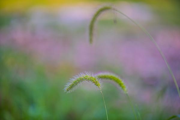 WET GRASS  16