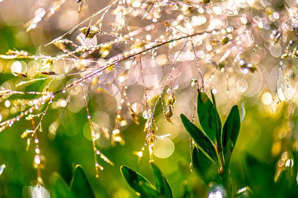 WET GRASS  11