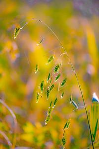WET GRASS  14