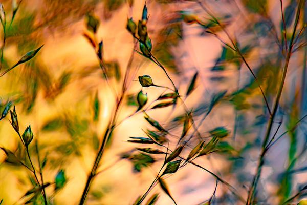WET GRASS  2