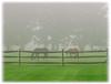 Horse Farm, Fairfield, CT