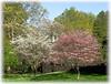Dogwoods, Greenfield Hill, Fairfield, CT