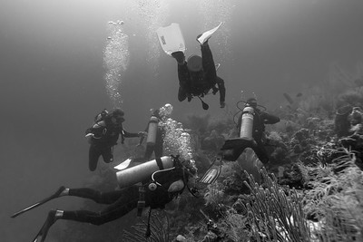 Scuba Diving - Belize Barrier Reef