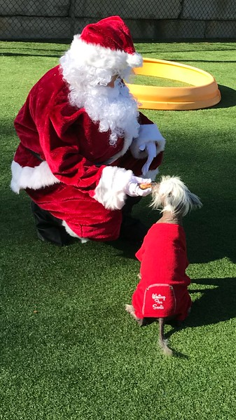 2017 STC Christmas Photos