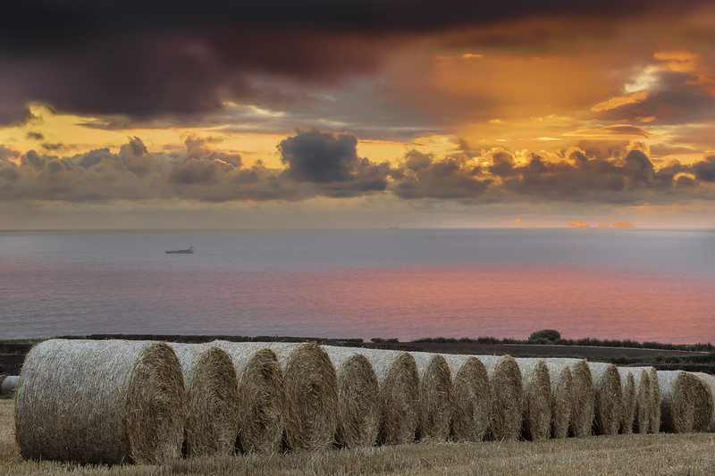 STRAW BALES - LYTHE BANK, WHITBY 2