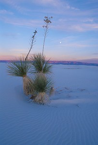 White Sands National Monument [Winter; New Mexico]