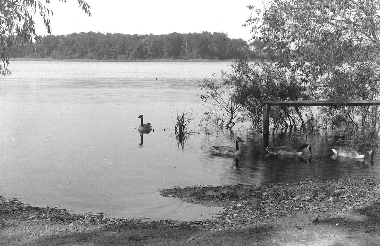 540 Unknown Pond