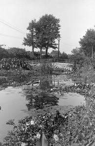517 Water Scene