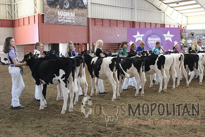 WI Jr SF 16 Holstein Calves