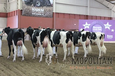 WI Jr SF 16 Holstein Cows