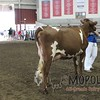 WIJrSF16IMG_3526