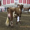 WIJrSF16IMG_3528