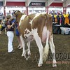 WIJrSF16IMG_3538