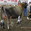 WIJrSF16IMG_3543
