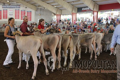 WI State Fair 16 Brown Swiss Show