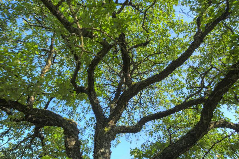 Durch den Kirschbaum 2