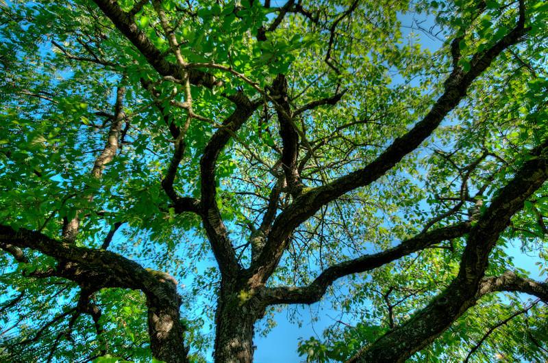 Durch den Kirschbaum 1
