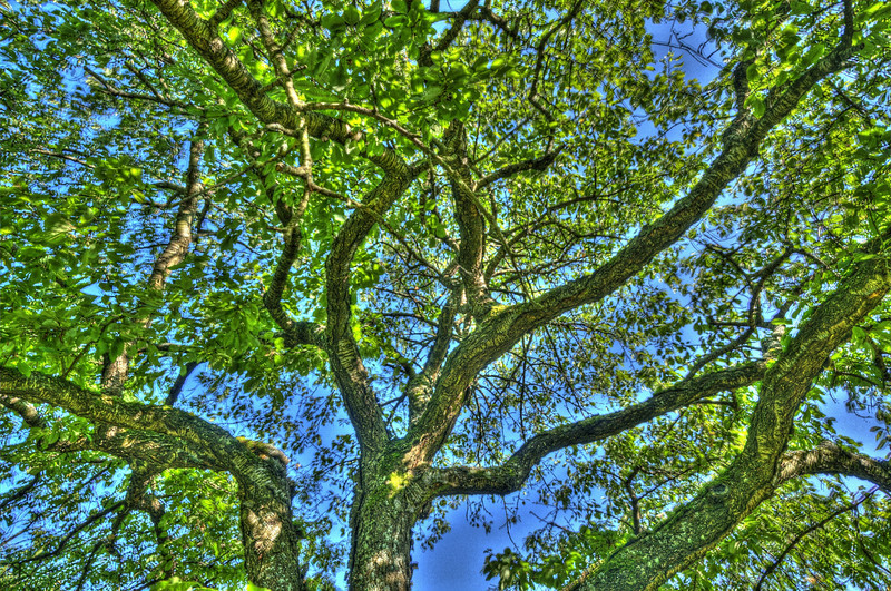 Durch den Kirschbaum 3