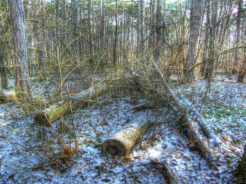 Jänner im Wald