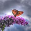 Schmetterlingsgenuss