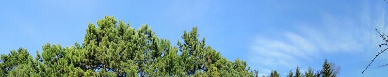 Baumspitzen