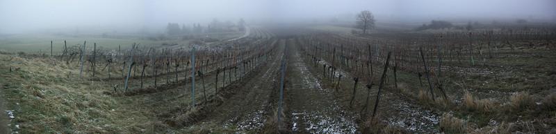 Weingarten im Eisnebel
