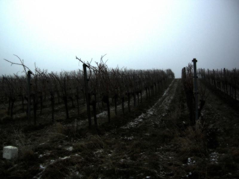 Weingarten eiskalt
