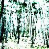 Im Wald, es grünt ?
