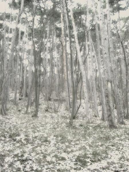 Im Wald, Nebelhauch