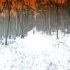 Im Wald, zur Melange