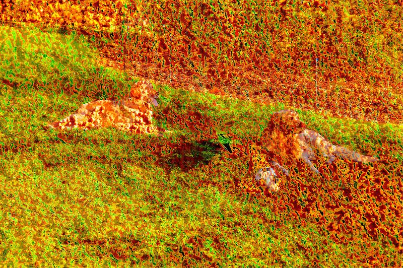 Herbsthunde