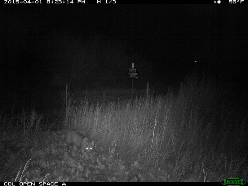 City of Longmont Wildlife Camera