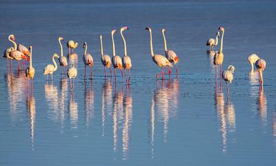 FLAMINGOS - LAKE NAKURU, KENYA