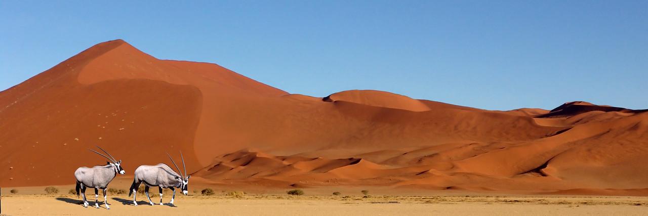 GEMSBOK - NAMIBIA