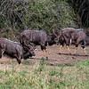 NYALAS - SOUTH AFRICA