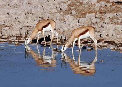SPRINGBOK - NAMIBIA